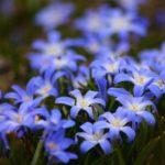 photo de fleur belle