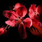 photo de fleur amour