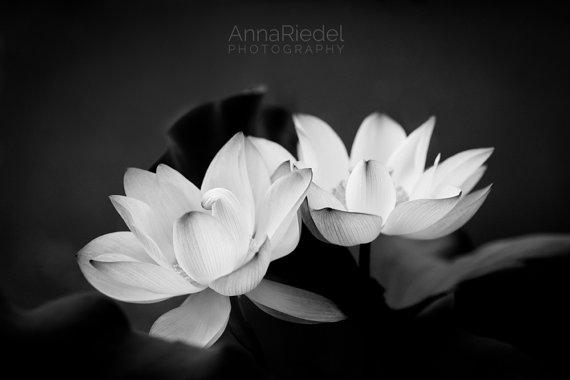 photo photo de fleur noir et blanc