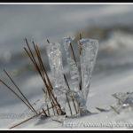 Herbe à la glace