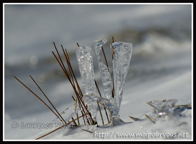 photo herbe à la glace