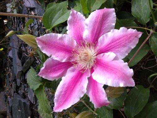 photo photo de belle fleur blanche