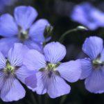 photo de belle fleur bleue
