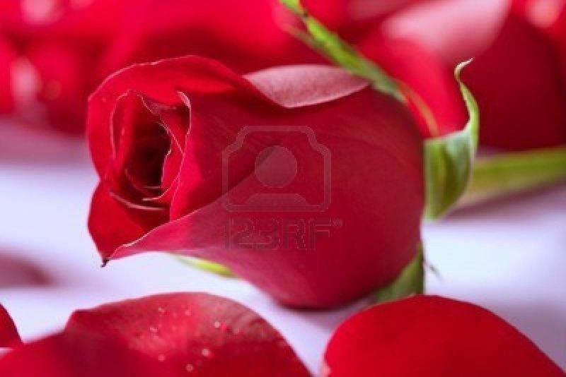 Photo De Belle Fleur Rouge 3