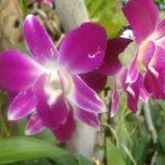 photo de fleur a imprimer