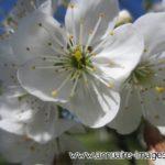 photo de fleur blanche