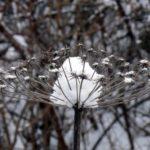 photo de fleur d'hiver