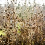 photo de fleur fanée