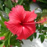 photo de fleur naturelle