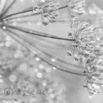 photo de fleur noir et blanc