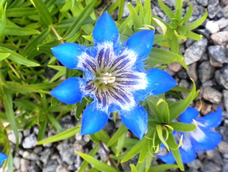 Photo De Fleur Vivace 5