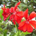 photo de fleurs d'été