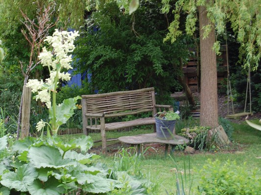 Photo Fleur De Rhubarbe 4