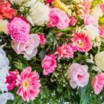 photo fleurs colorées