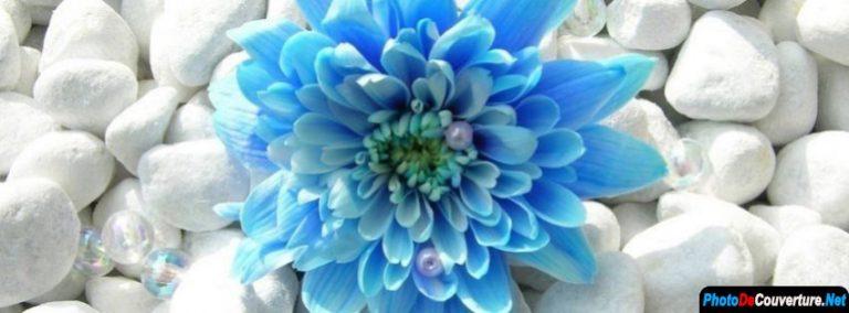 photo photo de fleur bleue