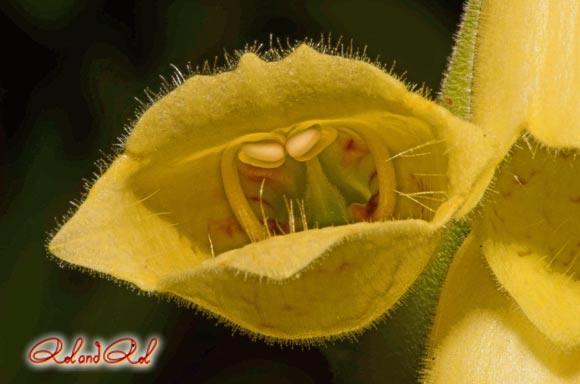 photo digitale à grandes fleurs